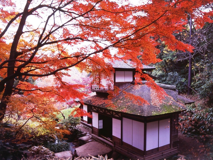 Where to see the autumn leaves in Tokyo