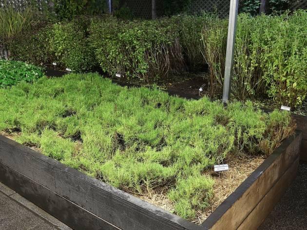 Garden at Attica