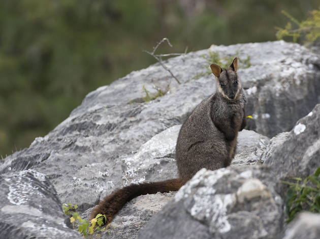 Five animals you'll meet on a Blue Mountains bushwalk
