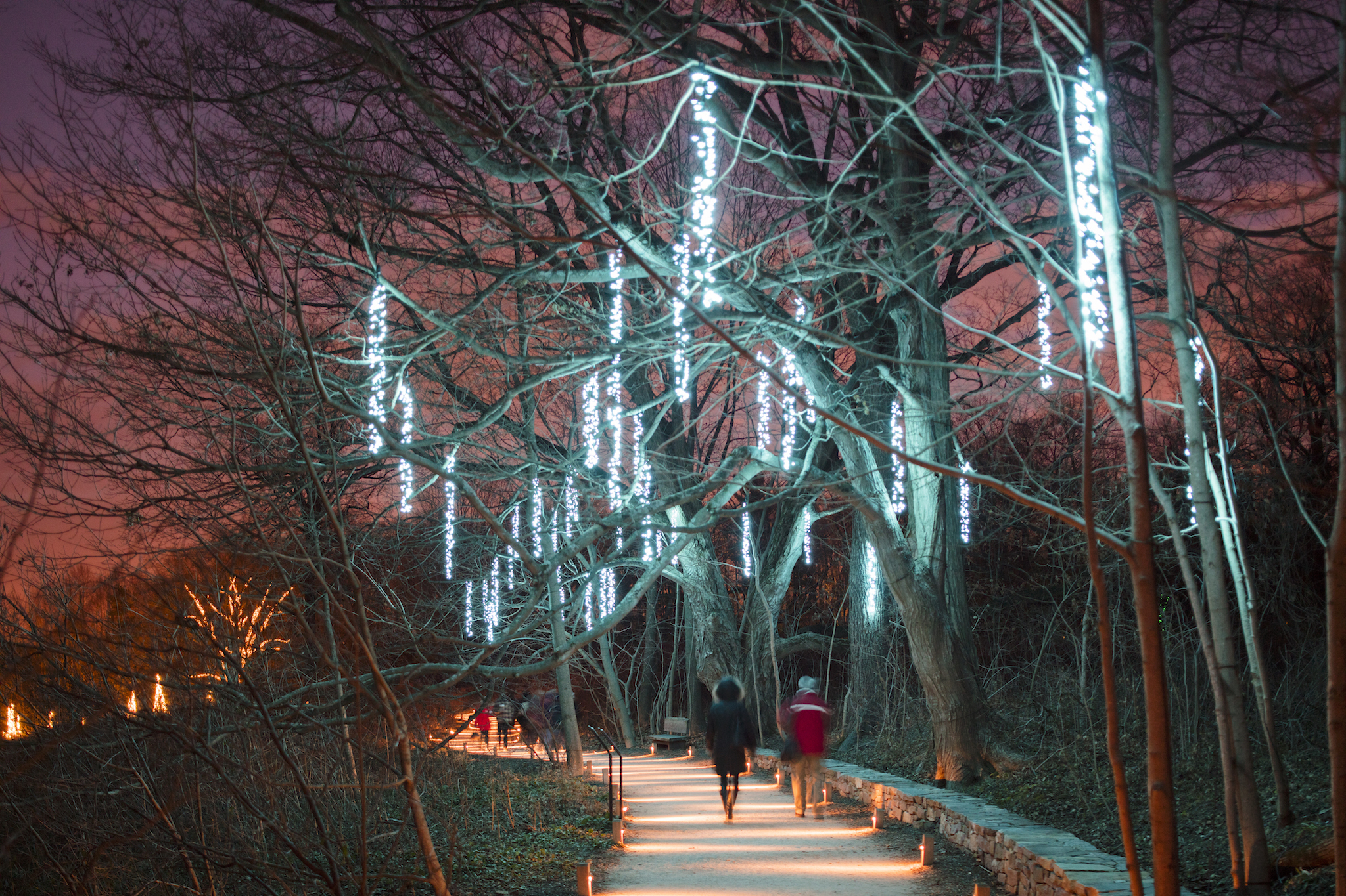 Longwood Gardens to launch massive holiday light show