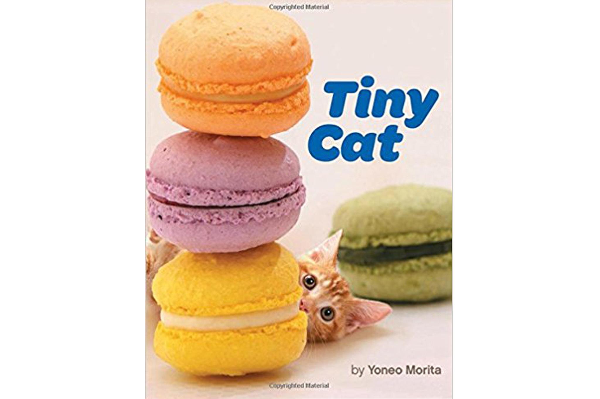 Tiny Cat by Yoneo Morita