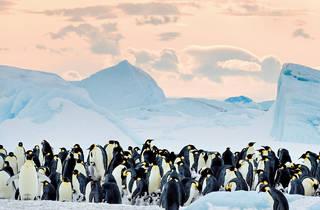 O Imperador: A Marcha dos Pinguins 2