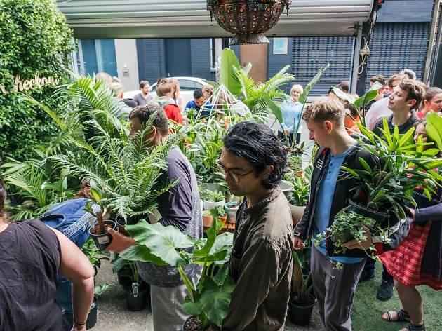 Jungle Collective plant sale