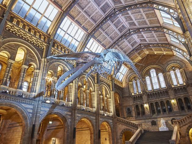 Natural History Museum - Hope