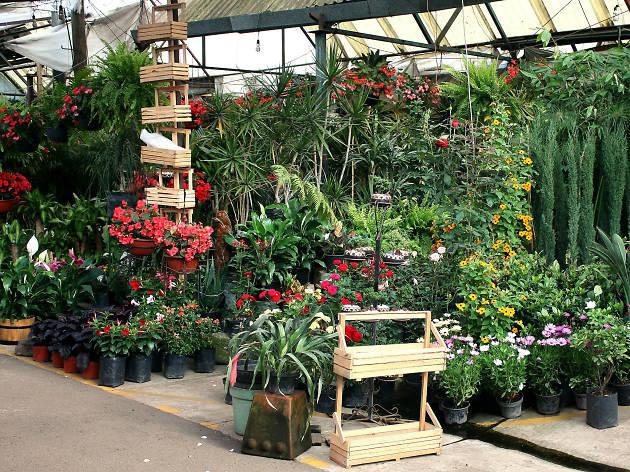 Mercados de flores y plantas en Xochimilco