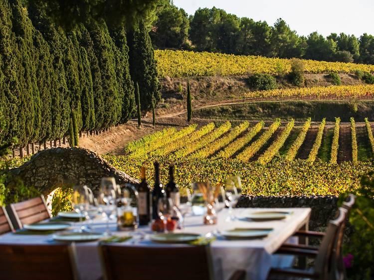 Dia 3: L'essència vitivinícola