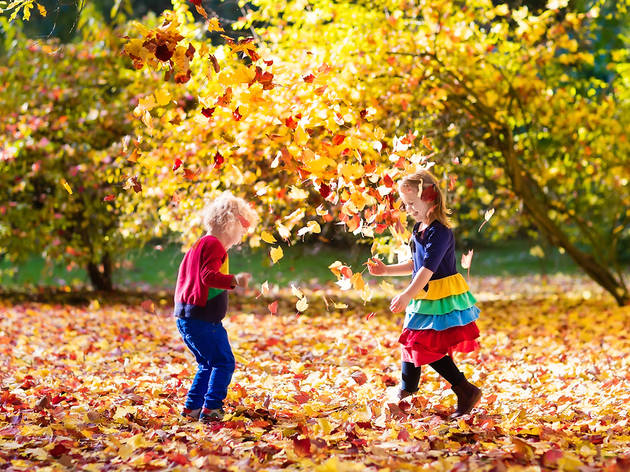 Best Things To Do In The Fall With Kids In New York City