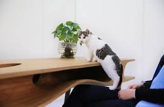 Esta podría ser la mesa definitiva para trabajar con tu gato