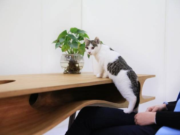 mesa gato