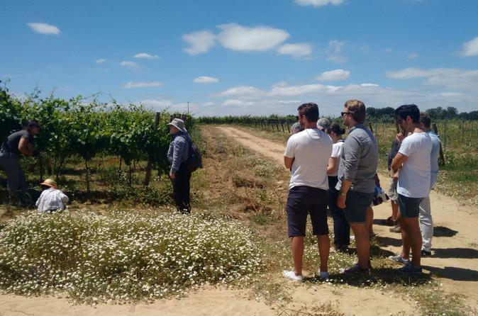 Wine tours- Alentejo wine tour including lunch