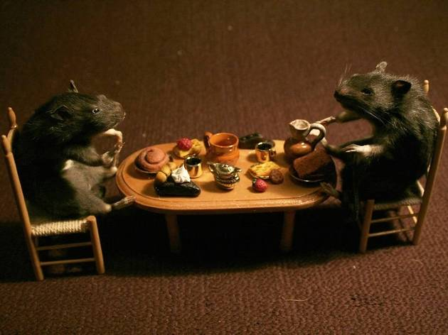 Taxidermy and Tea