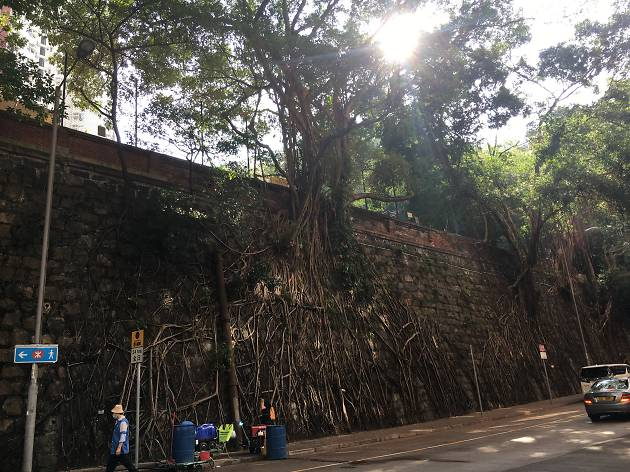 Kennedy Town stone wall trees