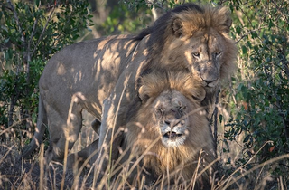 4 casos de homosexualidad en animales que desmontan el tabú