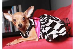 Pup Couture tienda online para mascotas