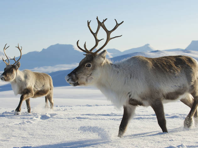 Visit the North Pole and meet reindeer on a weekend trip from NYC!