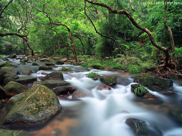 Tai Po Kau Nature Reserve