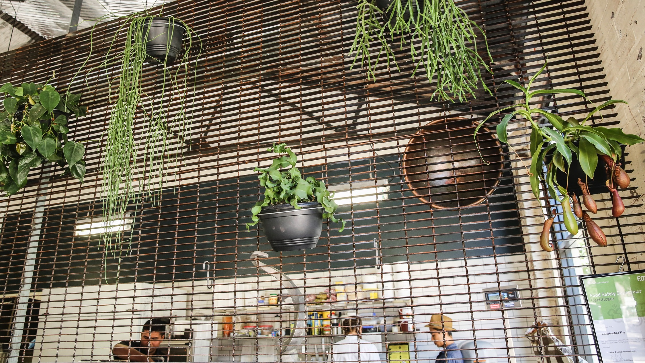 Green plants at Black Star Pastry - Rosebery