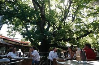 Customers enjoying the outside area at The Oaks Bar