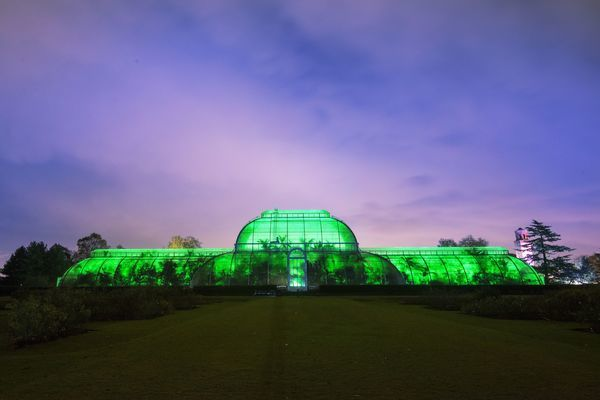 See Kew Gardens all lit up