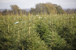 Where to buy Christmas trees in London – How to get a Christmas tree delivered in London – Time ...