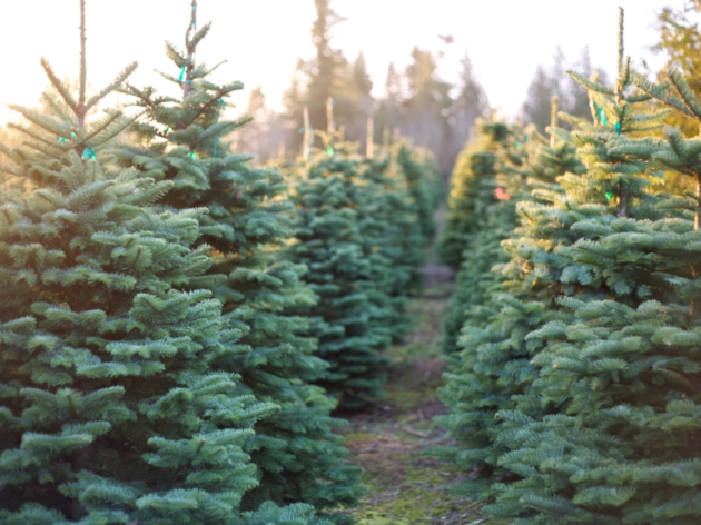Where to buy a Christmas tree in the Bay Area
