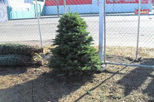 Christmas Tree Jamboree  Christmas Tree Jamboree Christmas Tree Jamboree