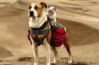 Las preciosas fotos de este perro y su mejor amigo viajando