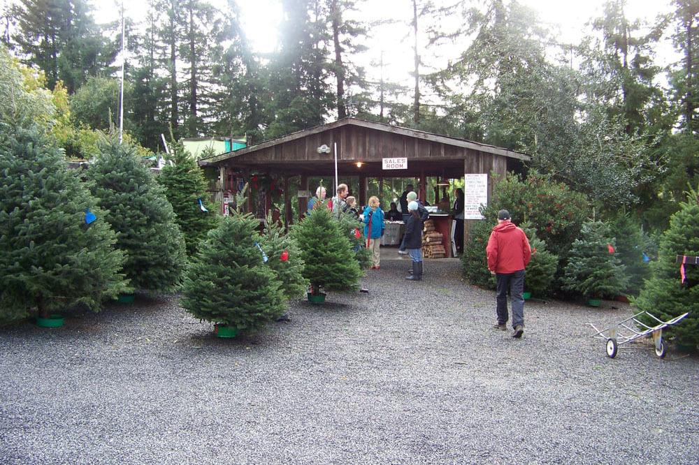 Larsen's Christmas Tree Farms