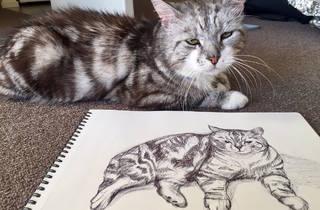Cats-hibition