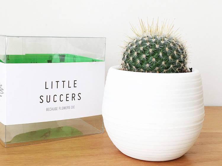 Little Succers