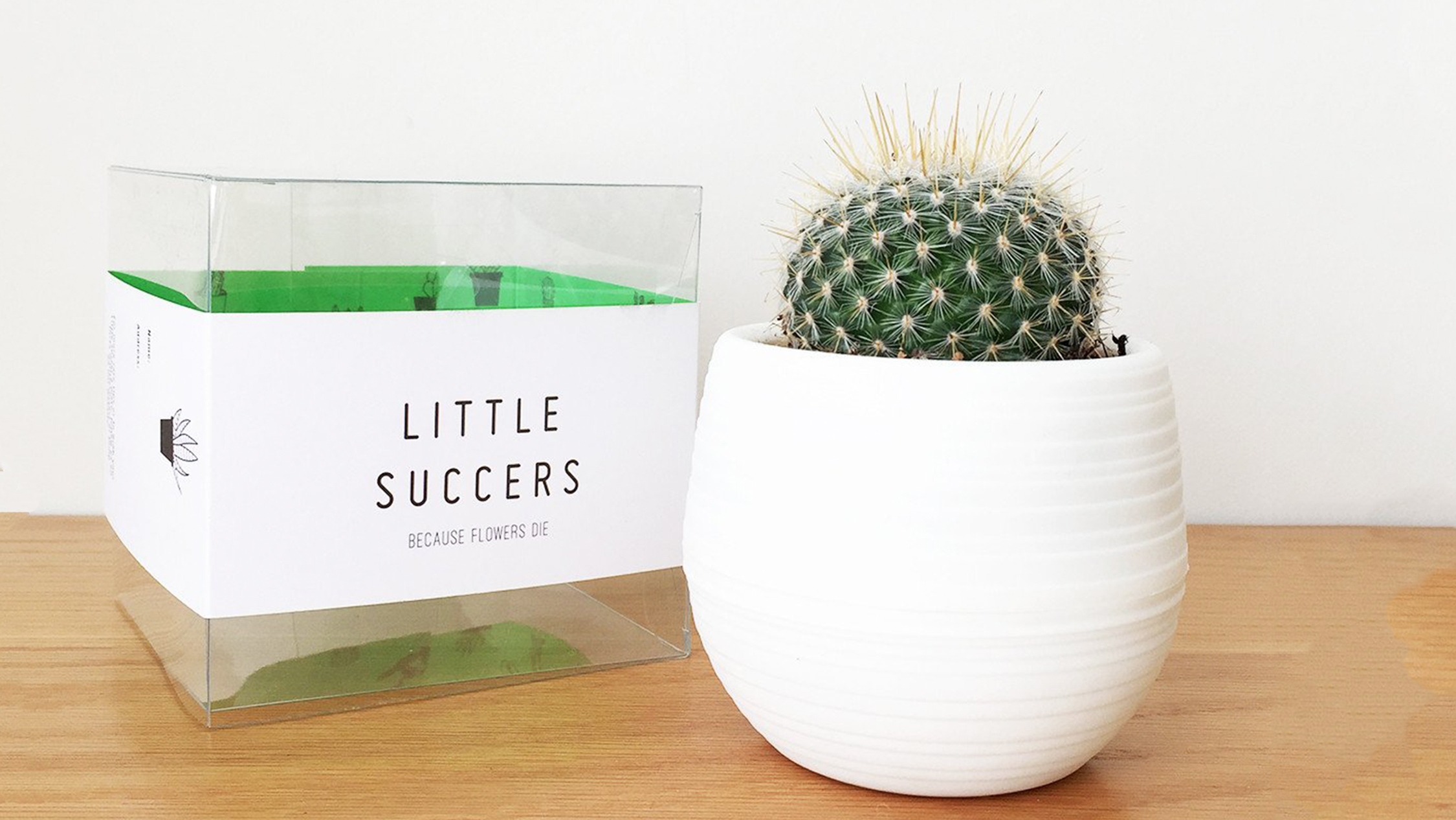 Cactus from Little Succers