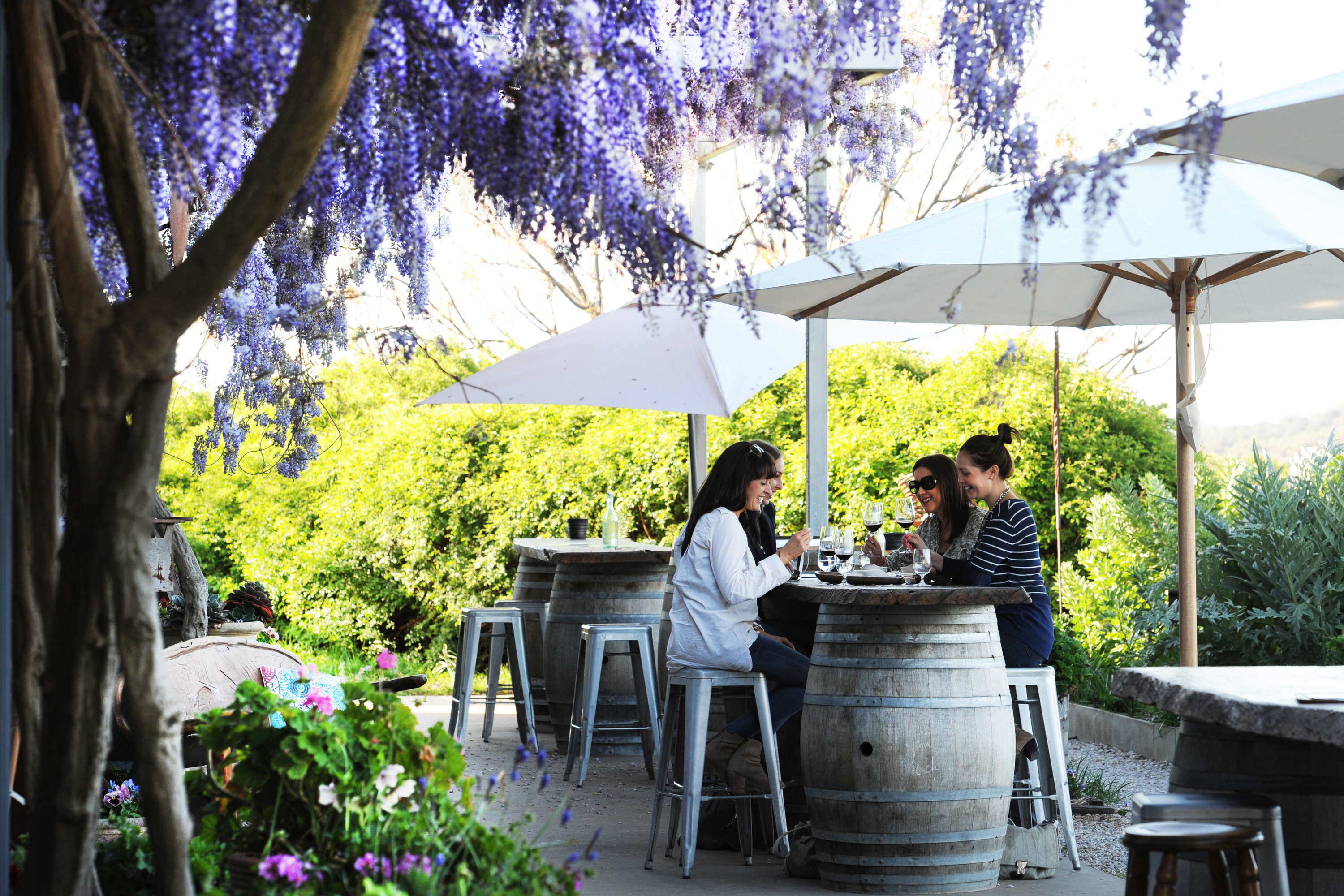 Women drinking wine under a wisteria tree at Lowe Wines cellar door
