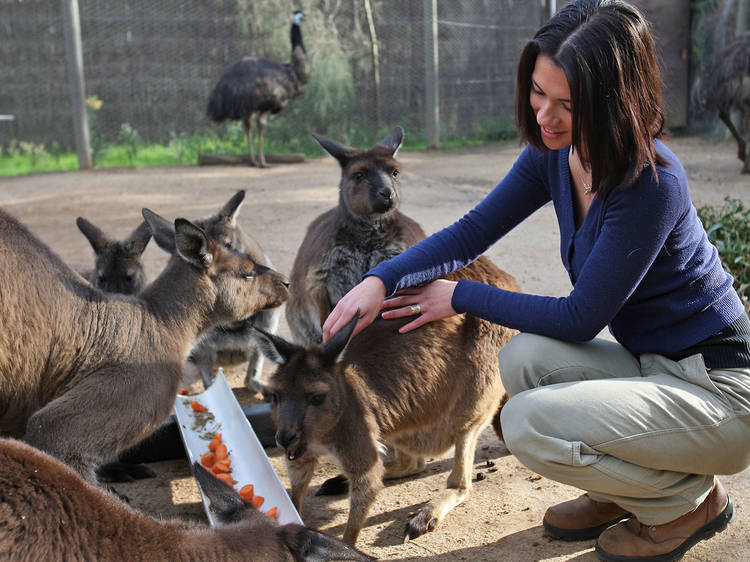 Spend the day (and maybe the night) at Melbourne Zoo