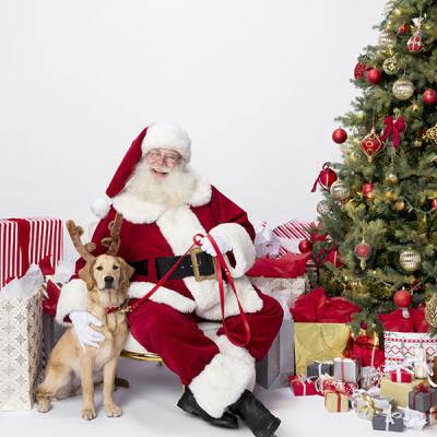 Santa with pets, dog