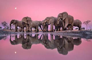ナショナル ジオグラフィック写真展「美しき地球」