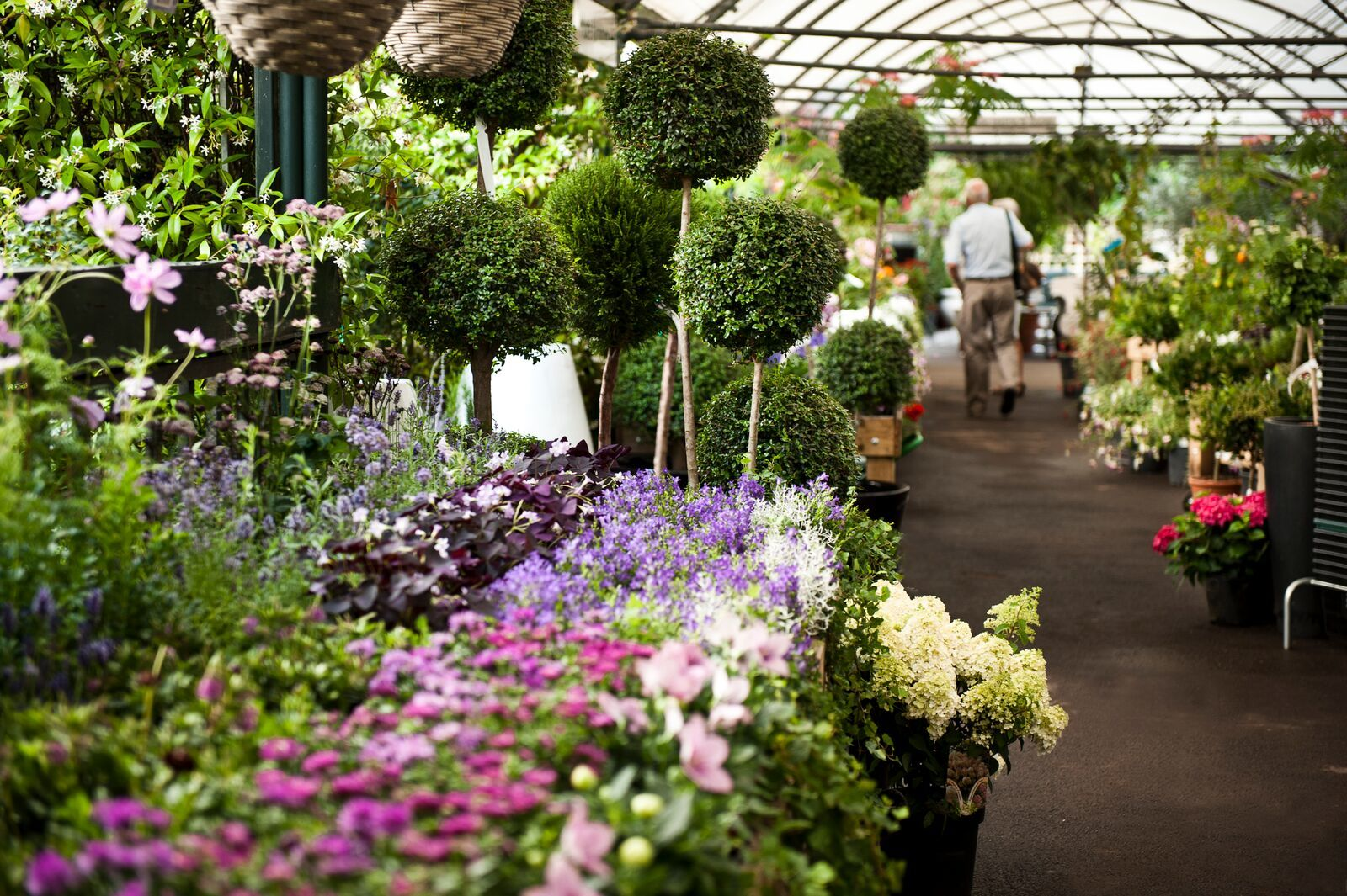 Which garden centres are now open again?