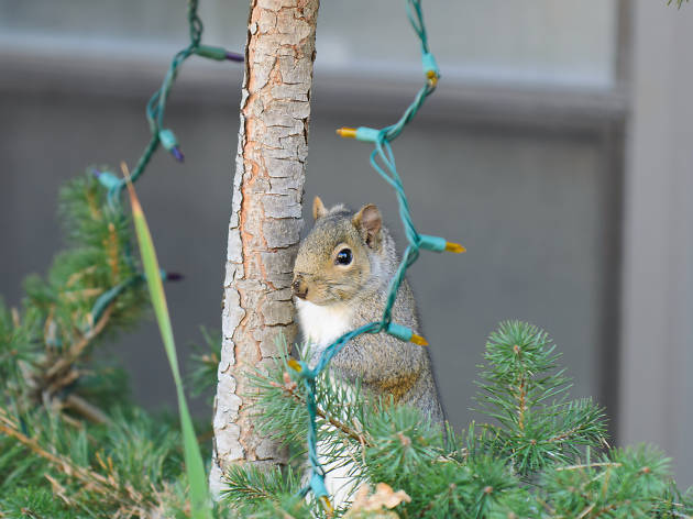 A squirrel from New Jersey is trying to ruin Christmas