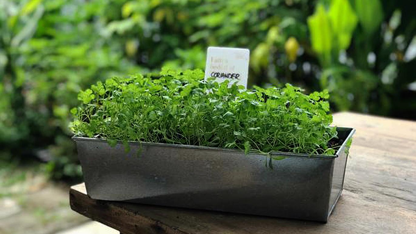 Eat, Shoots & Roots Planter Box