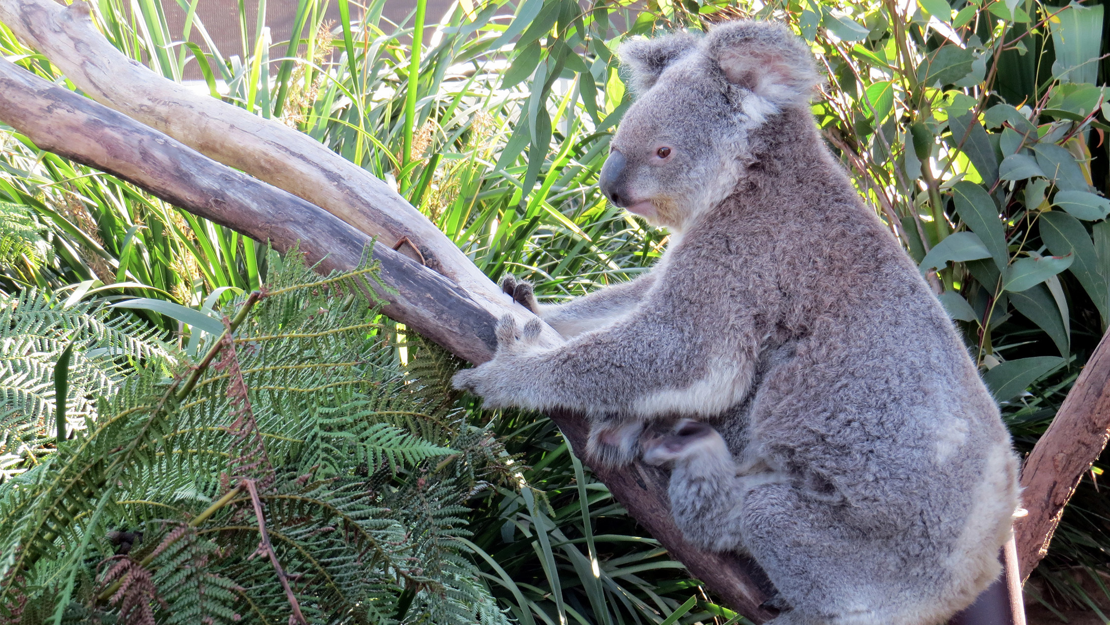 Where to see animals in Sydney