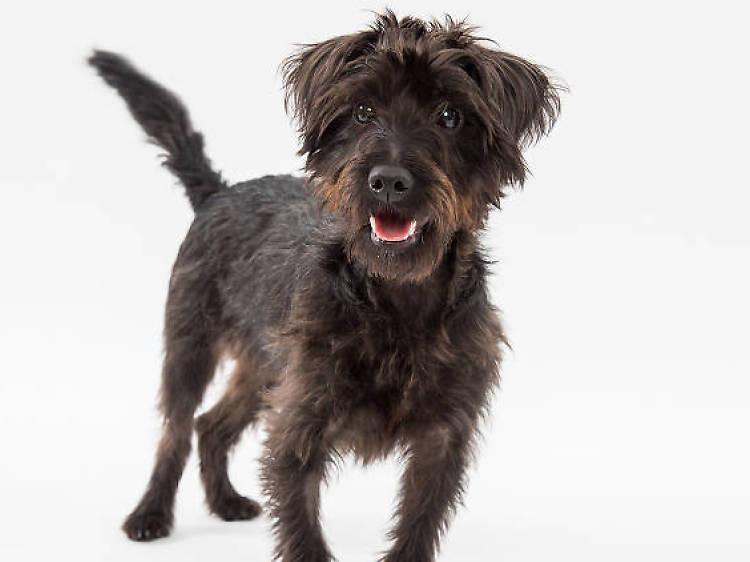 SportCan: Adiestramiento Canino y Can-pamento