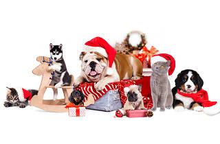 Actividades navideñas pets