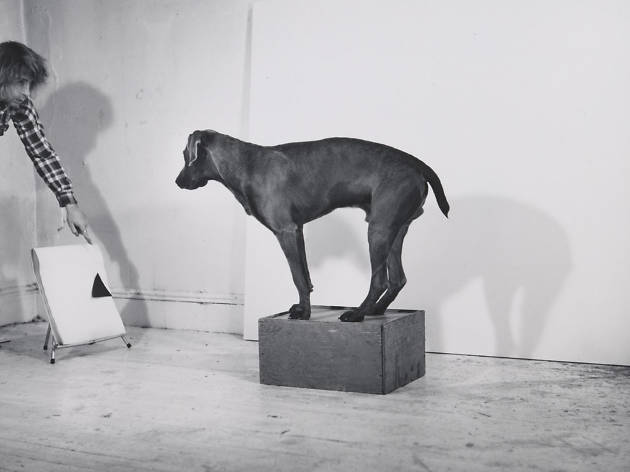 """Before/On/After: William Wegman and California Conceptualism"""