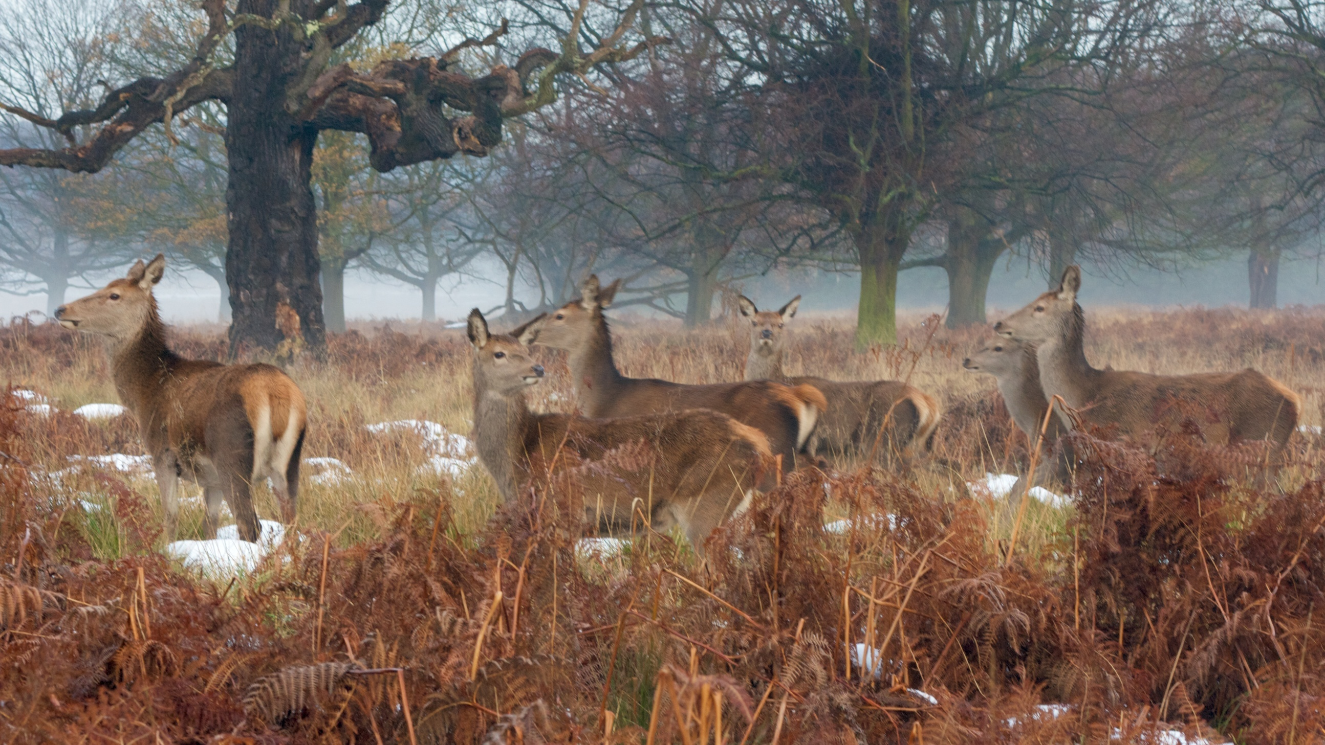 Richmond Park in the winter