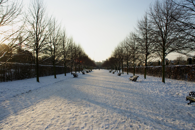 Regent's Park in the snow