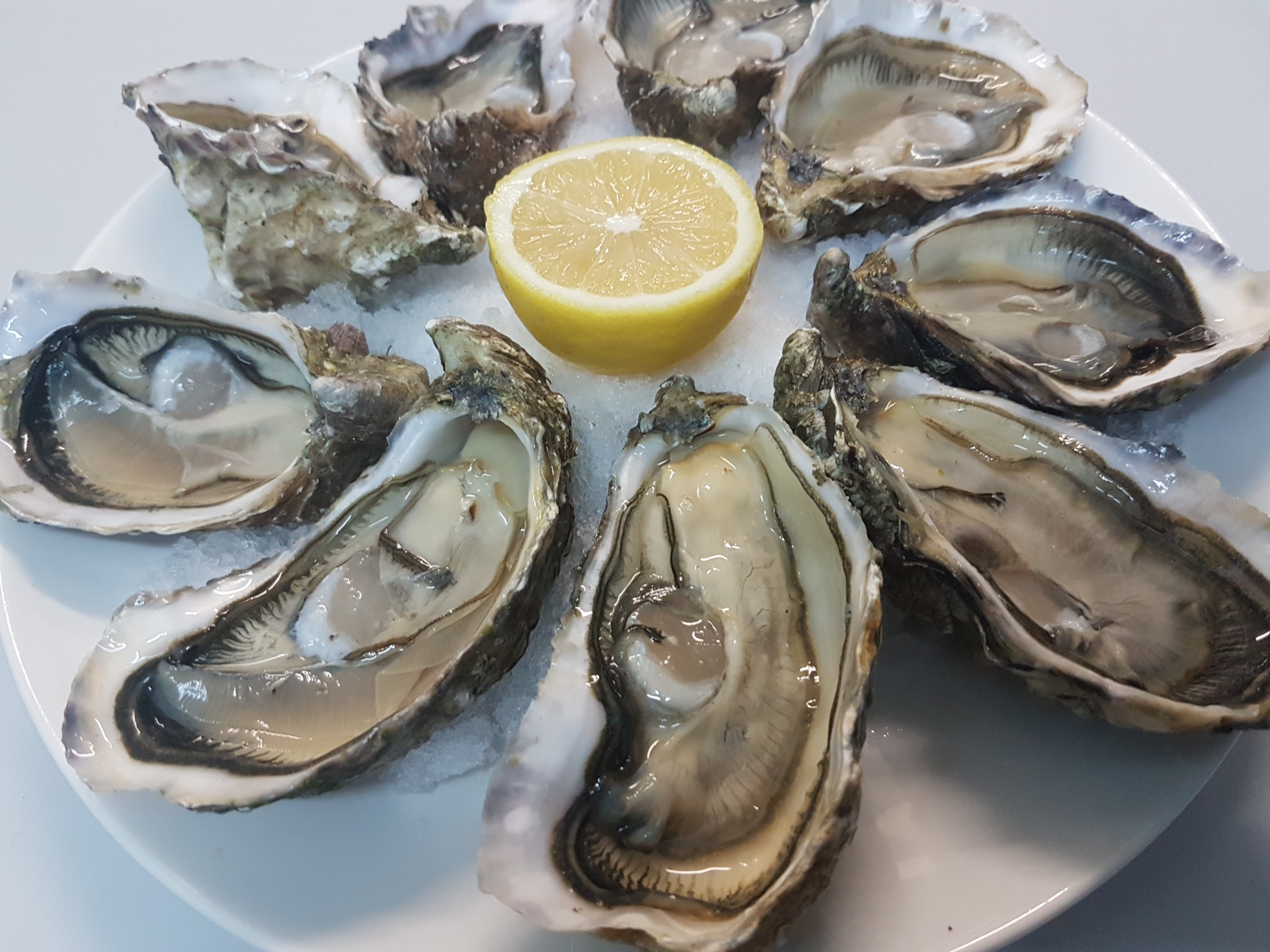 Oceanus-World oysters