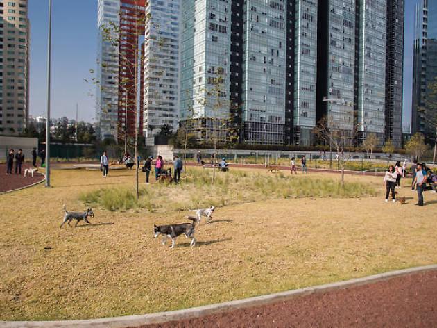 Perros en el Parque La Mexicana en Santa Fe