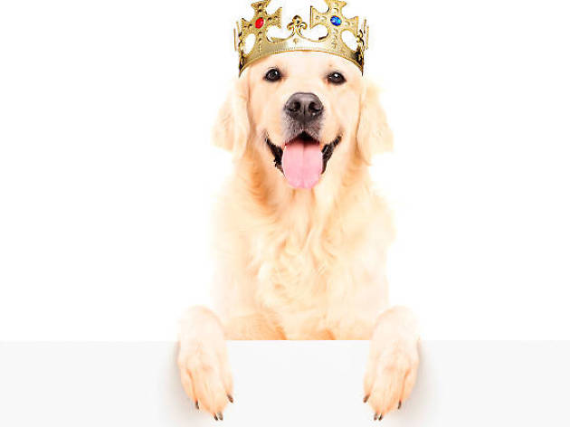Rosca de reyes para mascotas
