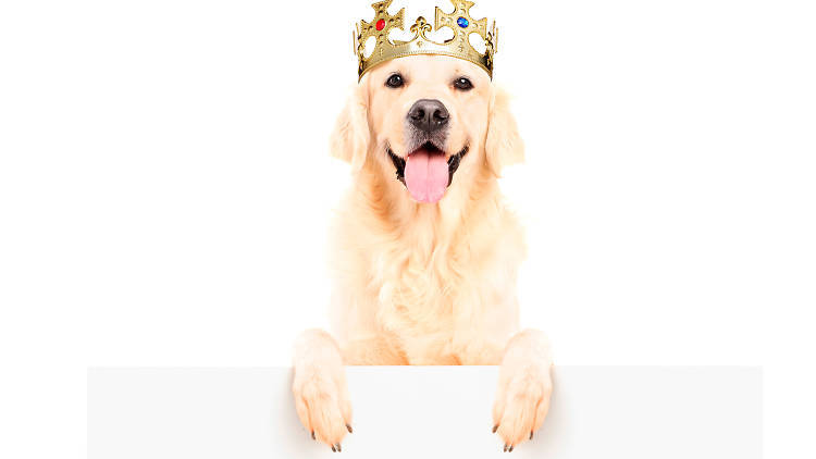 Dog Hero, la nueva plataforma para hospedar a tus mascotas