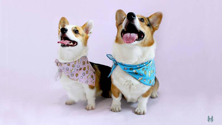 Caniche boutique canina