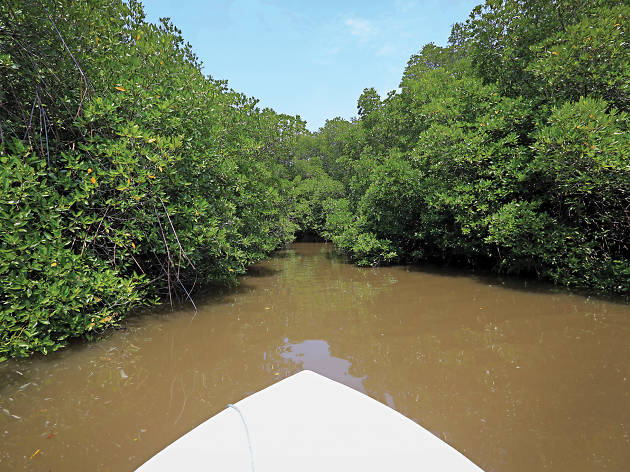 Explore the lush green mangroves